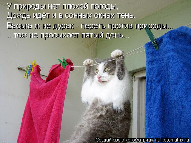 Котоматрица: У природы нет плохой погоды, Дождь идёт и в сонных окнах тень. Васька ж не дурак - переть против природы... ...тож не просыхает пятый день...