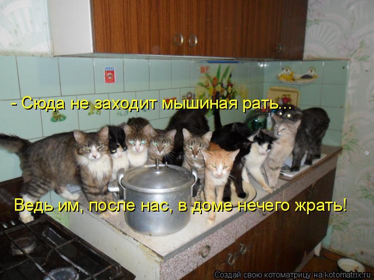 Котоматрица: Ведь им, после нас, в доме нечего жрать! - Сюда не заходит мышиная рать...