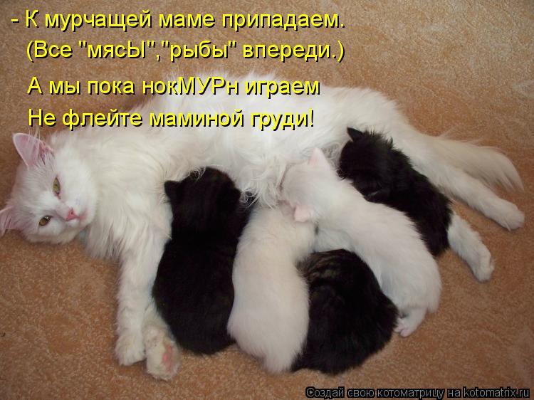 """Котоматрица: - К мурчащей маме припадаем. (Все """"мясЫ"""",""""рыбы"""" впереди.) А мы пока нокМУРн играем Не флейте маминой груди!"""