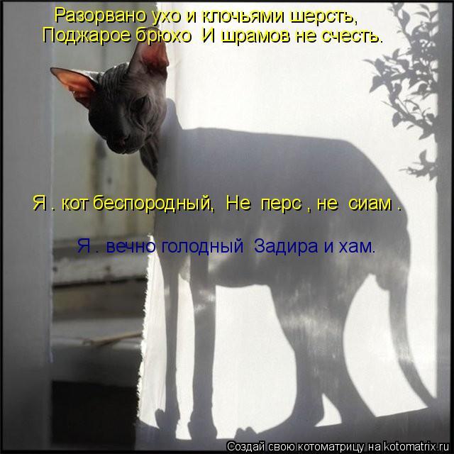 Котоматрица: Разорвано ухо и клочьями шерсть, Поджарое брюхо  И шрамов не счесть. Я – кот беспородный,  Не «перс», не «сиам». Я – вечно голодный  Задира и х
