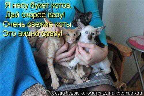 Котоматрица: Я несу букет котов, Дай скорее вазу! Очень свежие коты. Это видно сразу!