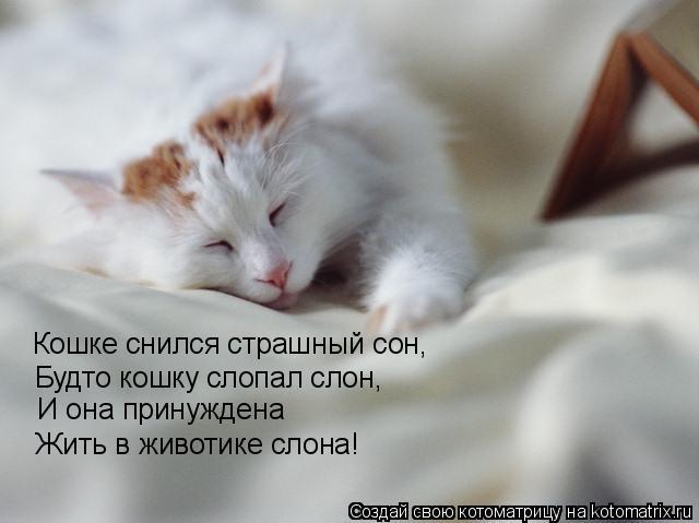 Котоматрица: Кошке снился страшный сон, Будто кошку слопал слон, И она принуждена Жить в животике слона!