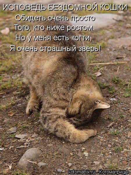 Котоматрица: ИСПОВЕДЬ БЕЗДОМНОЙ КОШКИ Обидеть очень просто Того, кто ниже ростом. Но у меня есть когти, Я очень страшный зверь!