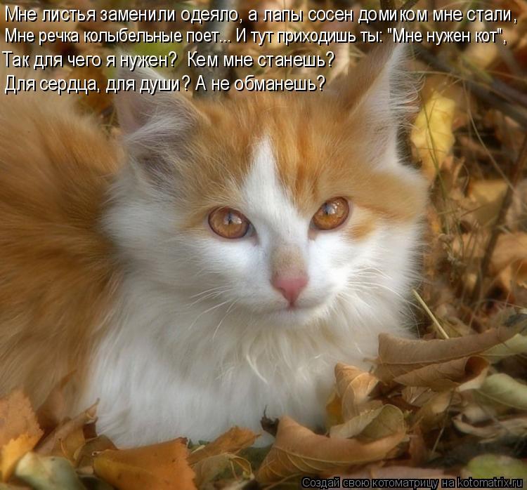 """Котоматрица: Мне листья заменили одеяло, а лапы сосен домиком мне стали, Мне речка колыбельные поет... И тут приходишь ты: """"Мне нужен кот"""", Для сердца, для д"""