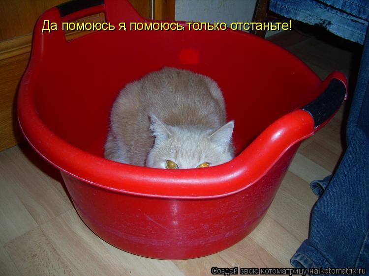Котоматрица: Да помоюсь я помоюсь только отстаньте! , ,