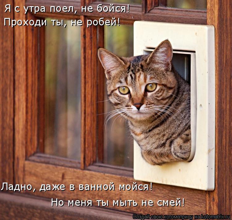 Котоматрица: Я с утра поел, не бойся! Проходи ты, не робей! Ладно, даже в ванной мойся! Но меня ты мыть не смей!