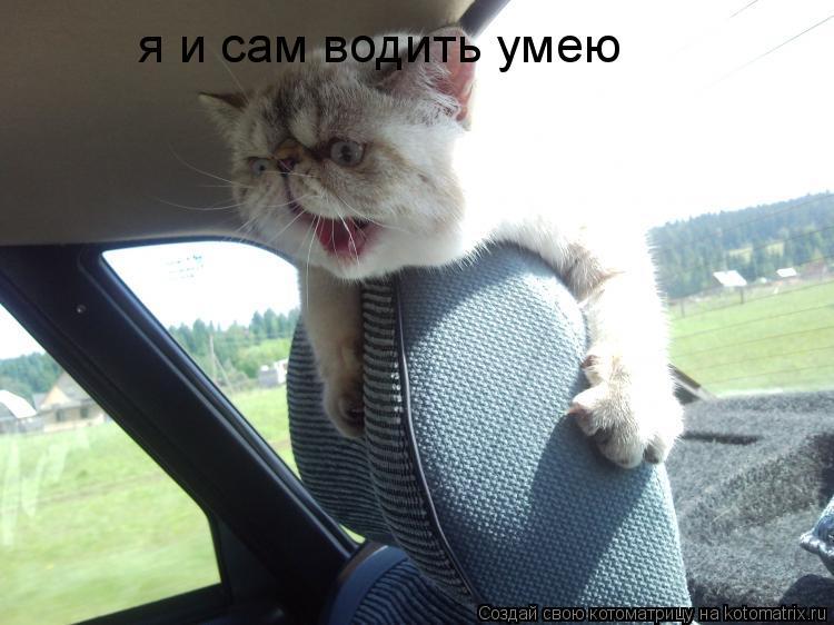 Котоматрица: я и сам водить умею