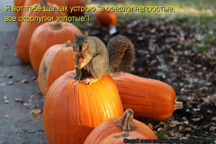 """Котоматрица: Я вот тебе ща как устрою """"а орешки непростые, все скорлупки золотые""""!"""