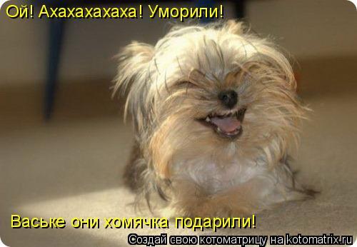 Котоматрица: Ой! Ахахахахаха! Уморили! Ваське они хомячка подарили!