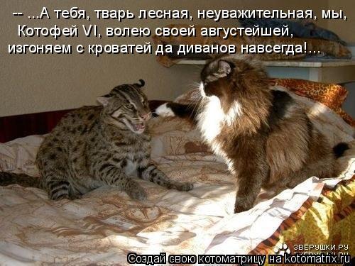 Котоматрица: -- ...А тебя, тварь лесная, неуважительная, мы, Котофей VI, волею своей августейшей, изгоняем с кроватей да диванов навсегда!...