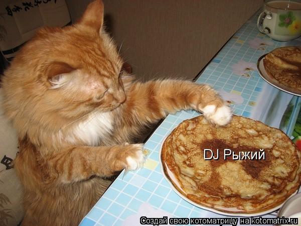 Котоматрица: DJ Рыжий