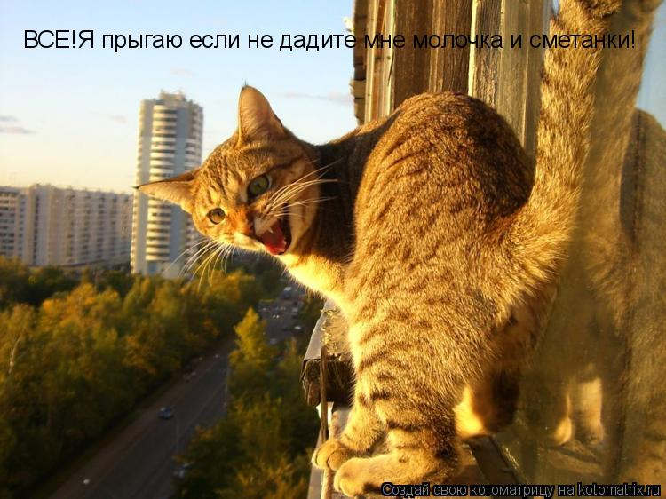 Котоматрица: ВСЕ!Я прыгаю если не дадите мне молочка и сметанки!