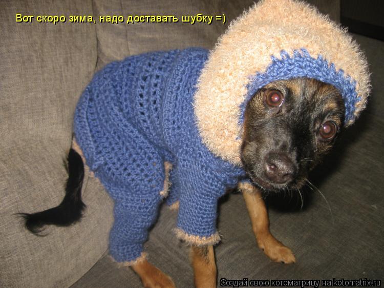 Котоматрица: Вот скоро зима, надо доставать шубку =)