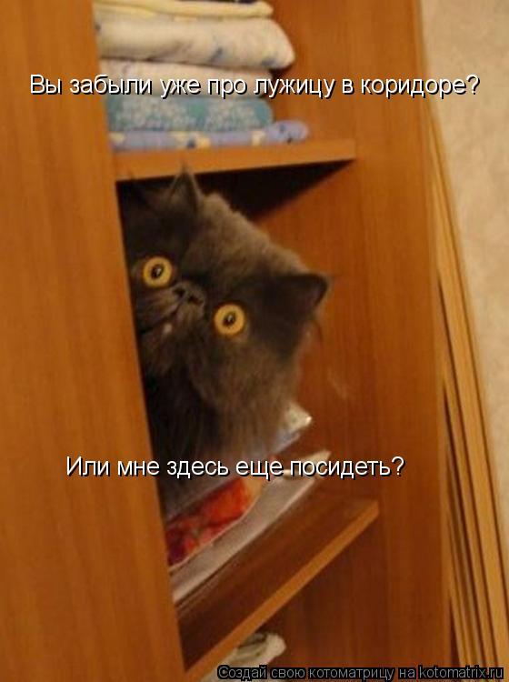 Котоматрица: Вы забыли уже про лужицу в коридоре?  Или мне здесь еще посидеть?