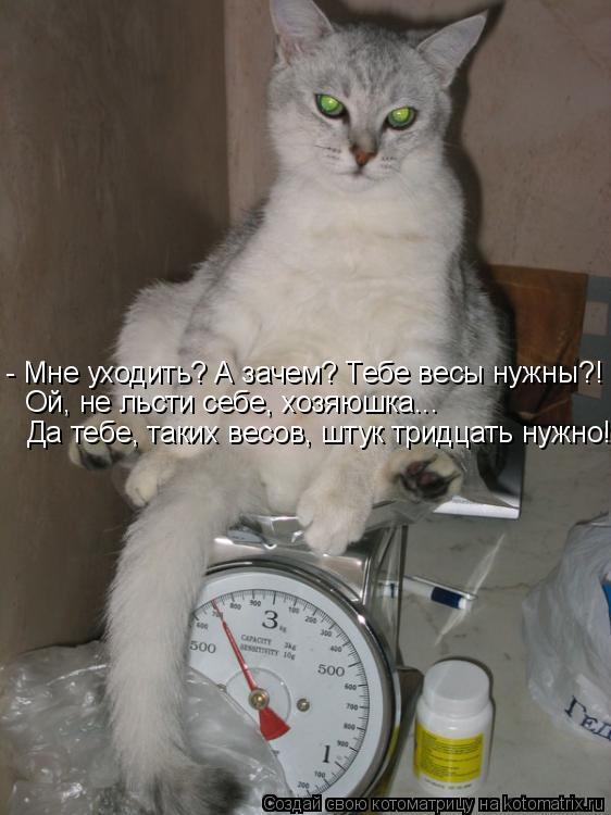 Котоматрица: - Мне уходить? А зачем? Тебе весы нужны?! Ой, не льсти себе, хозяюшка...  Да тебе, таких весов, штук тридцать нужно!...