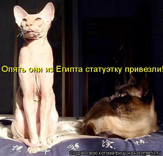 Котоматрица: Опять они из Египта статуэтку привезли!