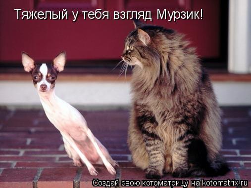 Котоматрица: Тяжелый у тебя взгляд Мурзик!