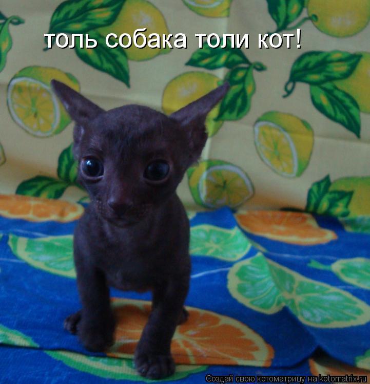 Котоматрица: толь собака толи кот!