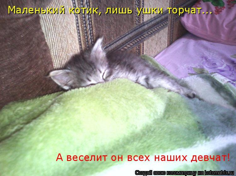 Котоматрица: Маленький котик, лишь ушки торчат... А веселит он всех наших девчат!