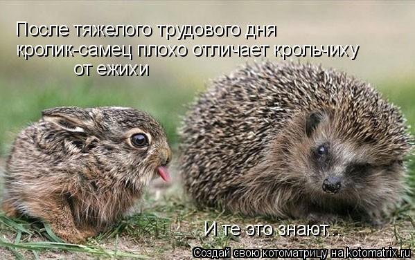 Котоматрица: После тяжелого трудового дня  кролик-самец плохо отличает крольчиху  от ежихи И те это знают...