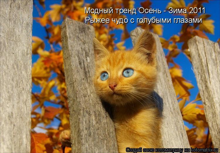 Котоматрица: Модный тренд Осень - Зима 2011 Рыжее чудо с голубыми глазами