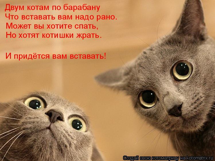 Котоматрица: Двум котам по барабану Что вставать вам надо рано. Может вы хотите спать, Но хотят котишки жрать. И придётся вам вставать!