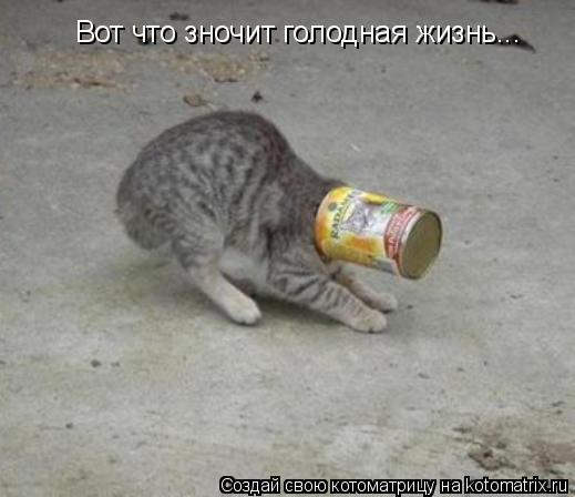 Котоматрица: Вот что зночит голодная жизнь...