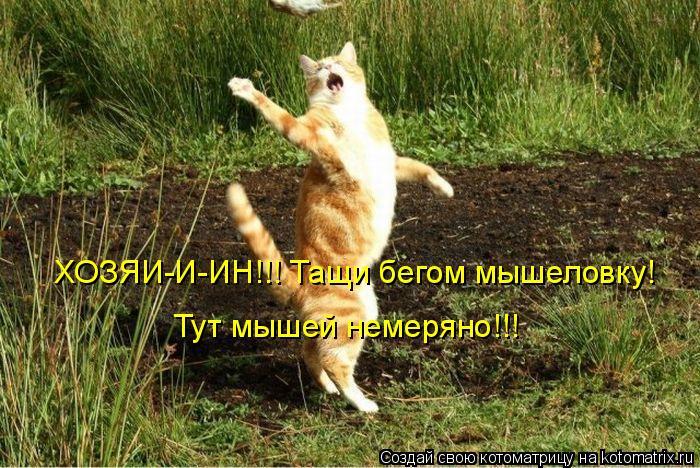 Котоматрица: ХОЗЯИ-И-ИН!!! Тащи бегом мышеловку! Тут мышей немеряно!!!