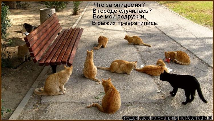 Котоматрица: -Что за эпидемия? В городе случилась? Все мои подружки, В рыжих превратились.