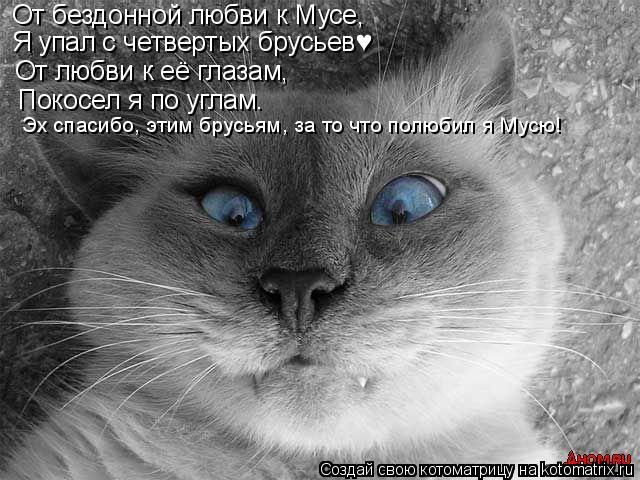 Котоматрица: От бездонной любви к Мусе, Я упал с четвертых брусьев♥ От любви к её глазам, Покосел я по углам. Эх спасибо, этим брусьям, за то что полюбил