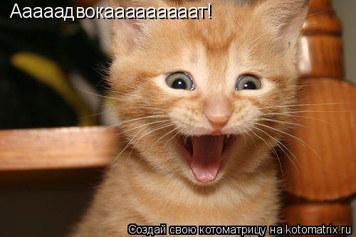 Котоматрица: Ааааадвокааааааааат!
