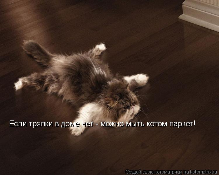 Котоматрица: Если тряпки в доме нет - можно мыть котом паркет!