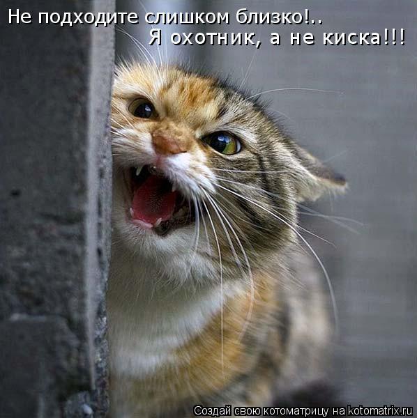 Котоматрица: Не подходите слишком близко!.. Я охотник, а не киска!!!