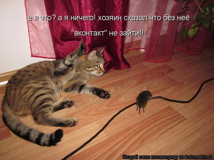 """Котоматрица: а я что? а я ничего! хозяин сказал что без неё  """"вконтакт"""" не зайти!!"""