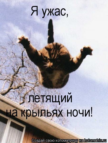 Котоматрица: Я ужас, летящий на крыльях ночи!