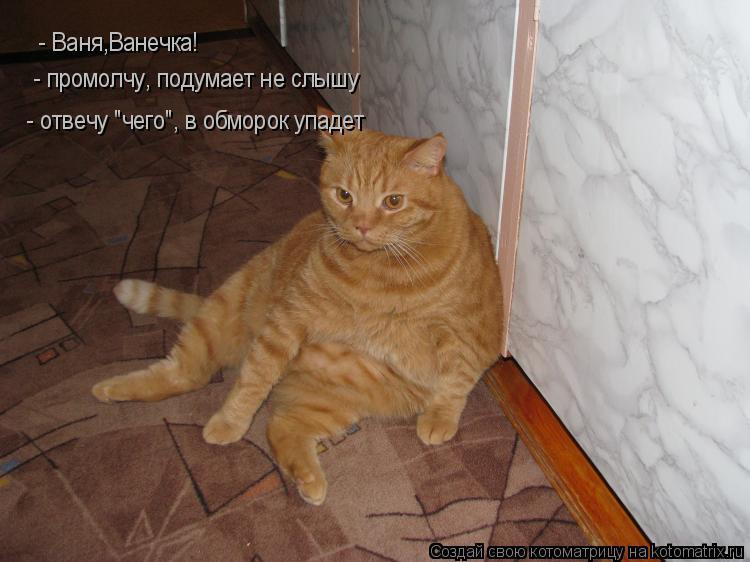 """Котоматрица: - Ваня,Ванечка! - промолчу, подумает не слышу - отвечу """"чего"""", в обморок упадет"""