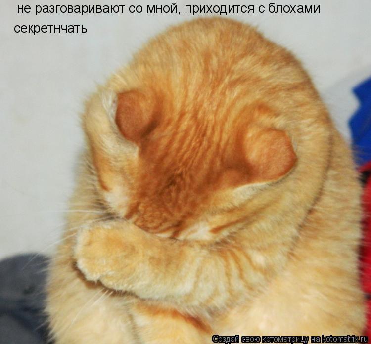 Котоматрица: не разговаривают со мной, приходится с блохами секретнчать