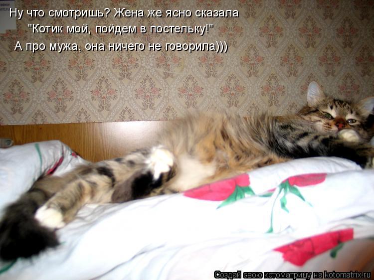 """Котоматрица: Ну что смотришь? Жена же ясно сказала """"Котик мой, пойдем в постельку!"""" А про мужа, она ничего не говорила)))"""
