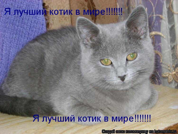 Котоматрица: Я лучший котик в мире!!!!!!! Я лучший котик в мире!!!!!!!
