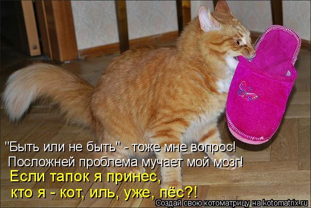 """Котоматрица: """"Быть или не быть"""" - тоже мне вопрос!  Посложней проблема мучает мой мозг!  Если тапок я принес,  кто я - кот, иль, уже, пёс?!"""
