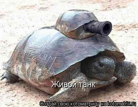 Котоматрица: Живой танк