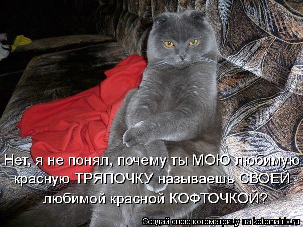 Котоматрица: Нет, я не понял, почему ты МОЮ любимую красную ТРЯПОЧКУ называешь СВОЕЙ любимой красной КОФТОЧКОЙ?