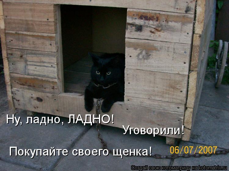 Котоматрица: Ну, ладно, ЛАДНО! Уговорили! Покупайте своего щенка!