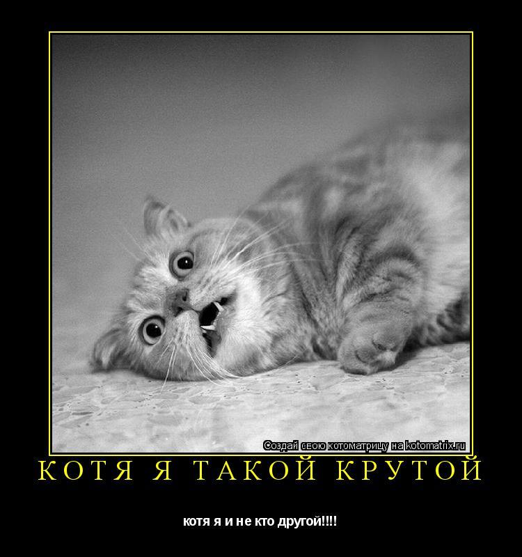 Котоматрица: котя я такой крутой котя я и не кто другой!!!!