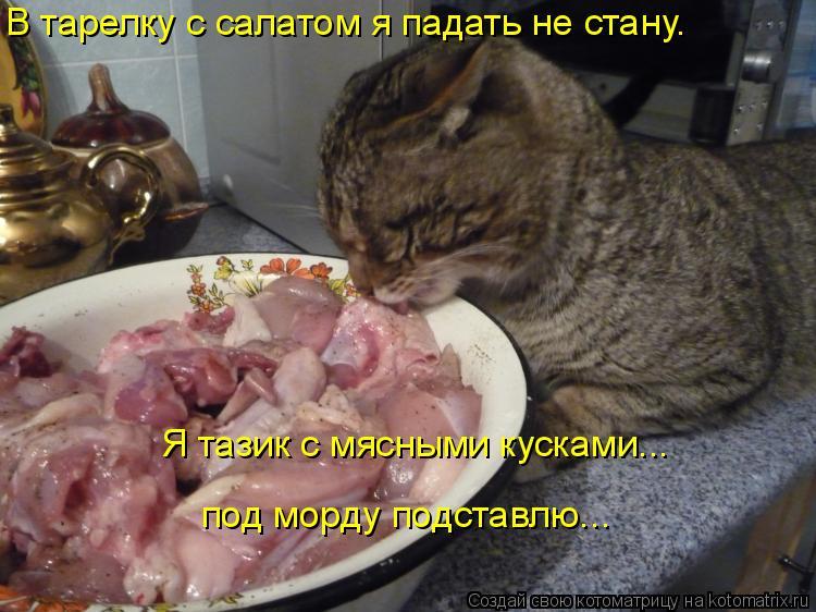 Котоматрица - В тарелку с салатом я падать не стану.  Я тазик с мясными кусками... п