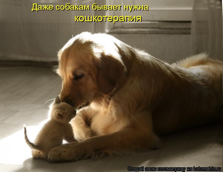 Котоматрица: Даже собакам бывает нужна кошкотерапия