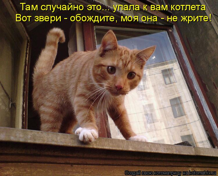 Котоматрица: Там случайно это... упала к вам котлета Вот звери - обождите, моя она - не жрите!