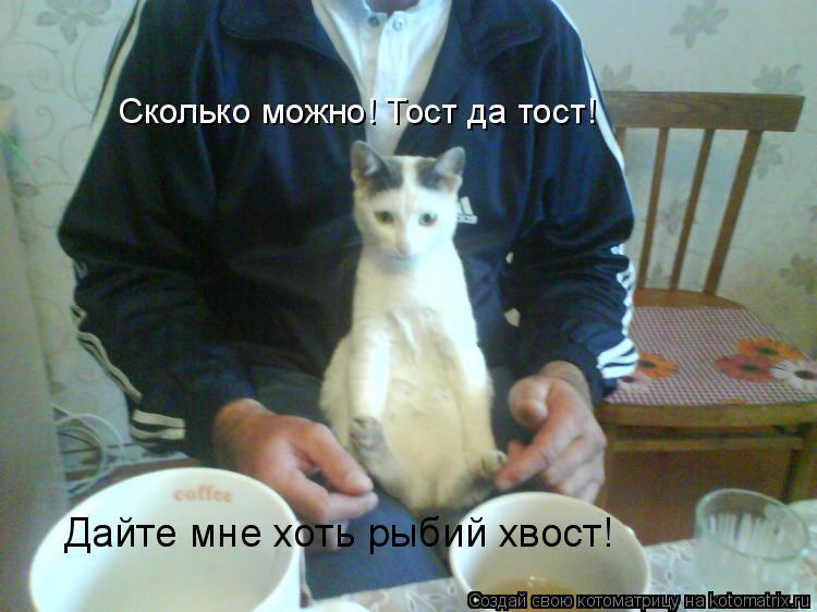 Котоматрица: Сколько можно! Тост да тост! Дайте мне хоть рыбий хвост!