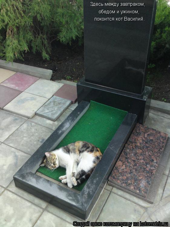 Котоматрица - Здесь между завтраком,  обедом и ужином, покоится кот Василий.