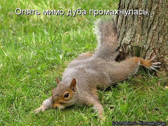 Котоматрица: Опять мимо дуба промахнулась...